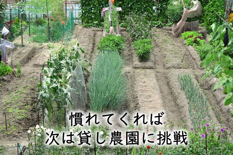 慣れてくれば、次は貸し農園に挑戦してみよう