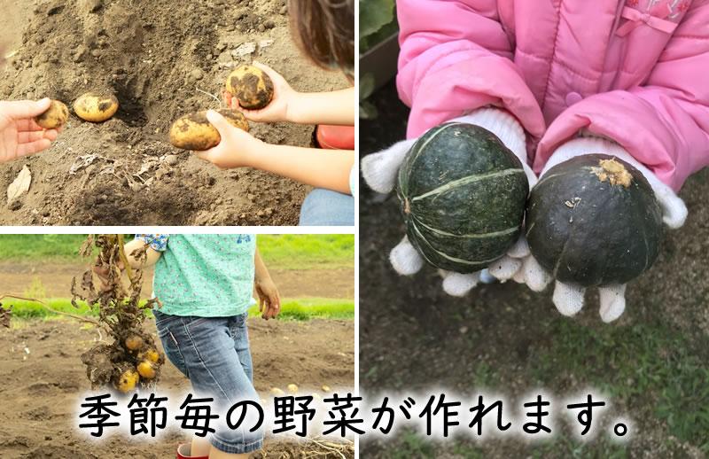 季節毎の野菜が作れます